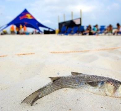 Flora-Bama Mullet Toss | Local Guide | Holiday Inn Express | Orange Beach AL