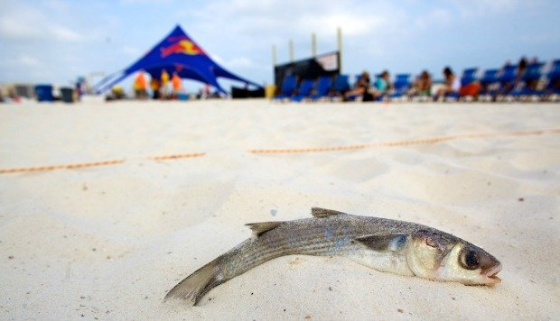 Flora-Bama Mullet Toss | Local Guide | Holiday Inn Express | Orange Beach AL